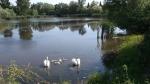 Vinodol - rybník