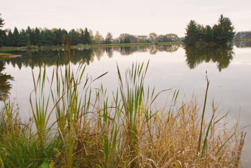 Beliansky rybník 2