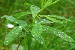 Viete, že ... ... prečo v lete cítime vôňu dažďa?