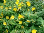 Viete, že ... ... odkiaľ vedia kvety, kedy svieti slnko?