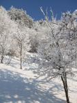 Ptičie-zimná priroda