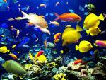 Viete, že ... ... príčinou úmrtia tropických rýb je ...