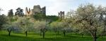 Divín 3 - zrúcaniny gotického hradu