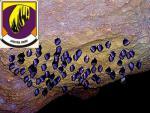 Jaskyňa Driny 5
