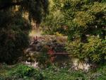 ostrovček na rieke Váh