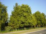 Park v Sečovskej Polianke